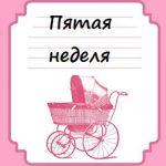 Пятая неделя беременности