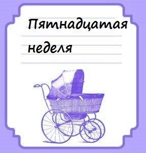 Пятнадцатая неделя беременности