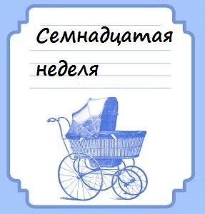 Семнадцатая неделя беременности