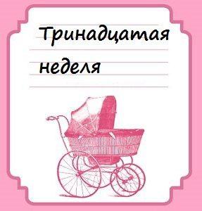 Тринадцатая неделя беременности