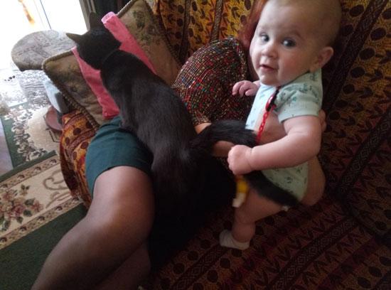 Давай! Заводись же ты, кошка!