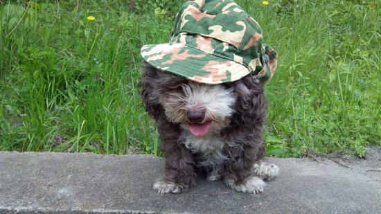 Я солдат, недоношенный ребёнок войны