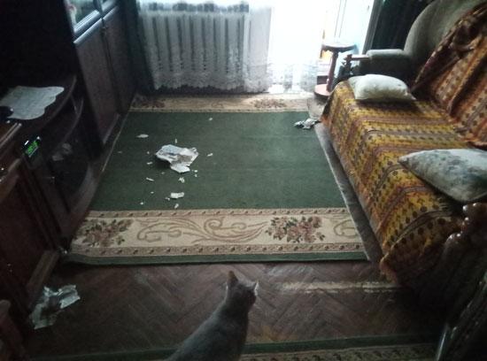 Протестное настроение: коты порвали газету «Футбол» и телепрограмму
