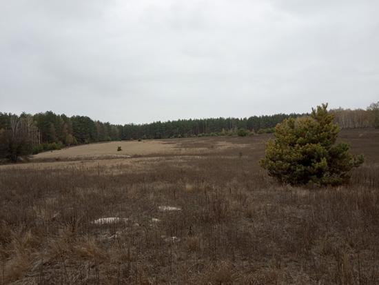 Блаженное эхо промерзлых полей